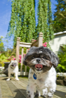 Dog Day Care Woodinville